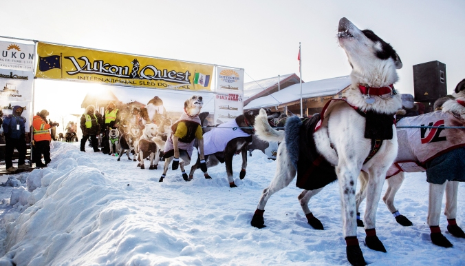 The start of the 2015 Yukon Quest.